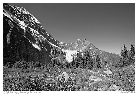 Alpine meadow at the base of Mt Edith Cavell. Jasper National Park, Canadian Rockies, Alberta, Canada (black and white)