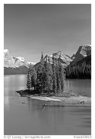 Evergreens on Spirit Island, Maligne Lake, afternoon. Jasper National Park, Canadian Rockies, Alberta, Canada (black and white)