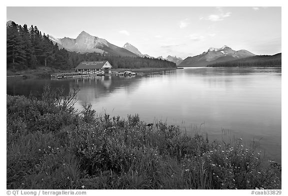 Wildflowers, Maligne Lake and boathouse, sunset. Jasper National Park, Canadian Rockies, Alberta, Canada (black and white)