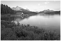 Wildflowers, Maligne Lake and boathouse, sunset. Jasper National Park, Canadian Rockies, Alberta, Canada ( black and white)