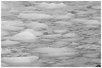 Close-up of icebergs floating in reflected yellow light. Jasper National Park, Canadian Rockies, Alberta, Canada (black and white)