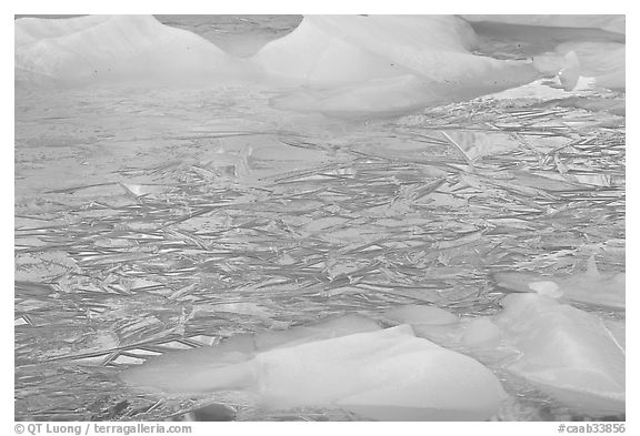 Ice patters and icebergs, Cavell Pond. Jasper National Park, Canadian Rockies, Alberta, Canada