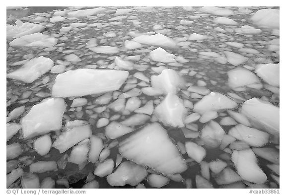 Iceberg tile, Cavell Pond. Jasper National Park, Canadian Rockies, Alberta, Canada (black and white)