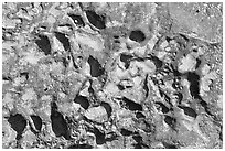 Alveoles in rock, Dinosaur Provincial Park. Alberta, Canada (black and white)