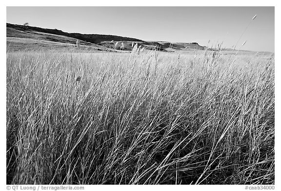 Tall prairie grasses with cliff in the distance,  Head-Smashed-In Buffalo Jump. Alberta, Canada (black and white)