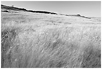 Tall prairie grasses blown by wind and cliff, Head-Smashed-In Buffalo Jump. Alberta, Canada ( black and white)