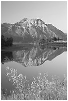 Vimy Peak and reflection in Middle Waterton Lake, sunrise. Waterton Lakes National Park, Alberta, Canada ( black and white)