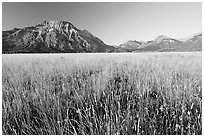 Tall grass prairie and mountains. Waterton Lakes National Park, Alberta, Canada (black and white)