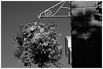 Hanging basket of flowers. Victoria, British Columbia, Canada (black and white)
