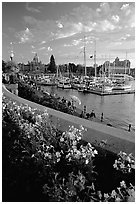 Flowers and Inner Harbour at sunset. Victoria, British Columbia, Canada (black and white)