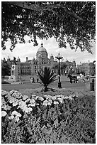 Legislature and horse carriage framed by leaves and flowers. Victoria, British Columbia, Canada (black and white)