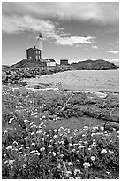 Flowers and Fisgard Lighthouse. Victoria, British Columbia, Canada ( black and white)