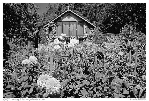 Black and white picture photo dalhias and cabin butchart for Cabine in affitto a victoria bc