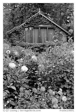Dalhias and cabin. Butchart Gardens, Victoria, British Columbia, Canada (black and white)