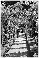 Arbour and path in Rose Garden. Butchart Gardens, Victoria, British Columbia, Canada (black and white)