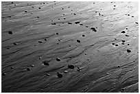 Reflections in wet sand at sunset, Half-moon bay. Pacific Rim National Park, Vancouver Island, British Columbia, Canada ( black and white)