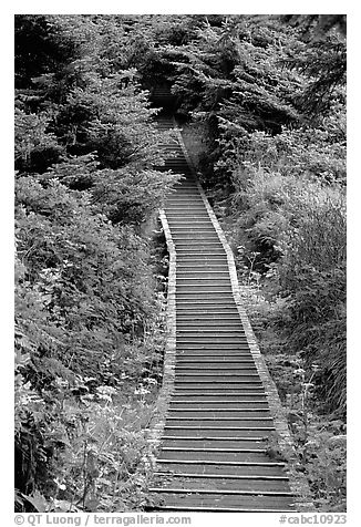 Boardwalk leading to South Beach. Pacific Rim National Park, Vancouver Island, British Columbia, Canada (black and white)