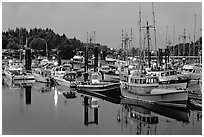 Commercial fishing fleet at dawn, Uclulet. Vancouver Island, British Columbia, Canada ( black and white)