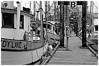 Fishing boats docked, Uclulet. Vancouver Island, British Columbia, Canada ( black and white)