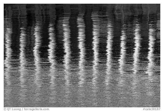 Column reflections. Victoria, British Columbia, Canada (black and white)