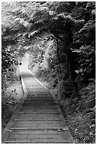 Boardwalk, South Beach trail. Pacific Rim National Park, Vancouver Island, British Columbia, Canada ( black and white)