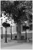Street lamps and tree, Bastion Square. Victoria, British Columbia, Canada ( black and white)