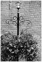 Flowers, street lamp, brick wall. Victoria, British Columbia, Canada ( black and white)