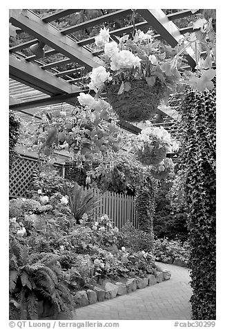 Hanging baskets with begonias and fuchsias. Butchart Gardens, Victoria, British Columbia, Canada (black and white)