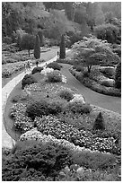 Sunken Garden. Butchart Gardens, Victoria, British Columbia, Canada ( black and white)