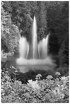 Ross Fountain and flowers. Butchart Gardens, Victoria, British Columbia, Canada (black and white)