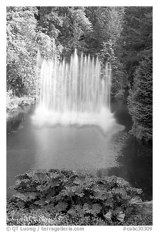 Ross Fountain. Butchart Gardens, Victoria, British Columbia, Canada (black and white)