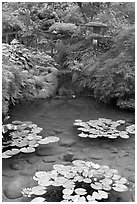 Lotus pond, Japanese Garden. Butchart Gardens, Victoria, British Columbia, Canada ( black and white)
