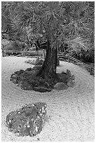 Gravel and tree, Japanese Garden. Butchart Gardens, Victoria, British Columbia, Canada (black and white)