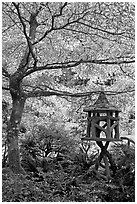 Lantern and Variegated Dogwood, Japanese Garden. Butchart Gardens, Victoria, British Columbia, Canada (black and white)