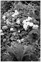 Flower arrangement in the Show Greenhouse. Butchart Gardens, Victoria, British Columbia, Canada ( black and white)