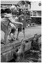 Kids feeding harbour seals, Fisherman's wharf. Victoria, British Columbia, Canada ( black and white)