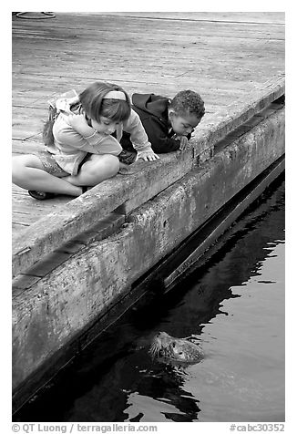 Kidds looking at a harbor seal, Fisherman's wharf. Victoria, British Columbia, Canada (black and white)