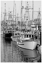 Commercial fishing fleet, Upper Harbour. Victoria, British Columbia, Canada (black and white)