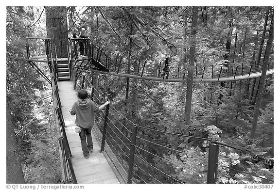 Treetop trail. Vancouver, British Columbia, Canada (black and white)