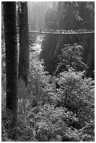 Capilano suspension bridge. Vancouver, British Columbia, Canada ( black and white)