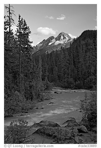 Yoho River, trees, and Cathedral Crags, late afternoon. Yoho National Park, Canadian Rockies, British Columbia, Canada (black and white)