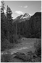 Yoho River, trees, and Cathedral Crags, late afternoon. Yoho National Park, Canadian Rockies, British Columbia, Canada ( black and white)