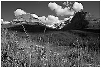 Wildflowers, peaks and Stanley Glacier, afternoon. Kootenay National Park, Canadian Rockies, British Columbia, Canada (black and white)