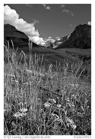 Wildflowers, mountains and Stanley Glacier, afternoon. Kootenay National Park, Canadian Rockies, British Columbia, Canada (black and white)