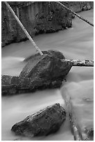 Fallen trees in silt-colored Tokkum Creek. Kootenay National Park, Canadian Rockies, British Columbia, Canada (black and white)