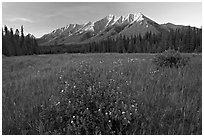 Meadow with wildflowers and Mitchell Range, sunset. Kootenay National Park, Canadian Rockies, British Columbia, Canada (black and white)