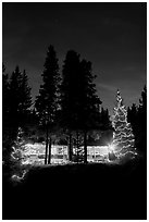 Cabin and illuminated Christmas trees at night. Kootenay National Park, Canadian Rockies, British Columbia, Canada (black and white)