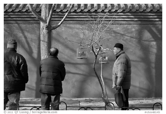 Bird market along red wall. Beijing, China (black and white)