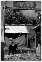 Men extract grains in a farm courtyard. Shaping, Yunnan, China ( black and white)