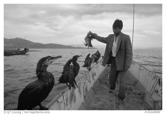 Cormorant fisherman regroups his birds at the end of fishing session. Dali, Yunnan, China (black and white)
